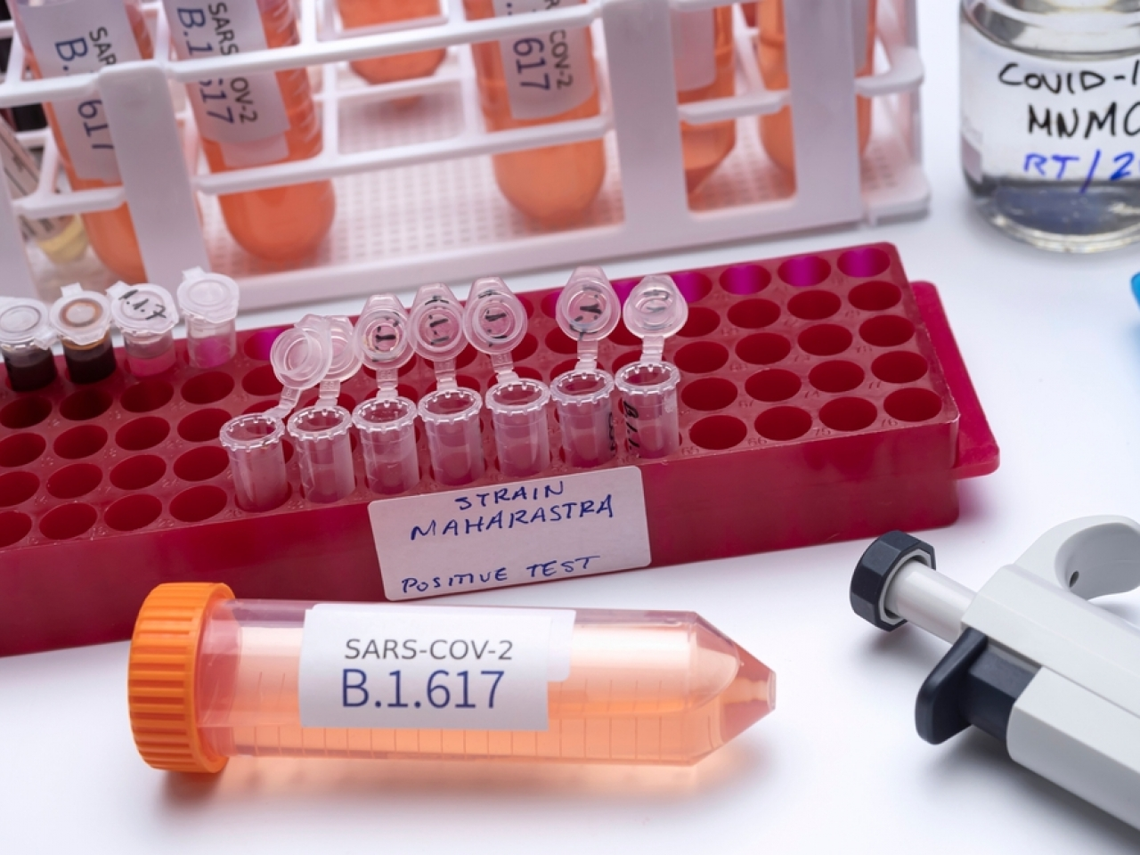 The WHO says the B.1.617 variant appears to be transmitting more easily than the original virus. Photo: Shutterstock
